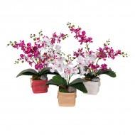 Композиция Орхидеи в горшочке