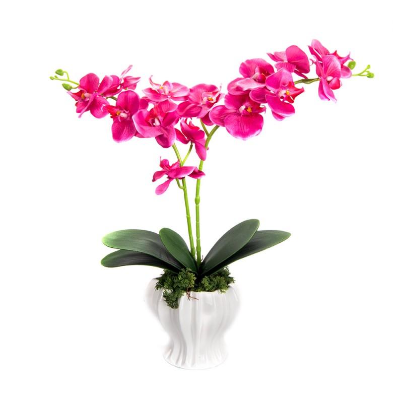 Лучшие Интернет Магазины Орхидей