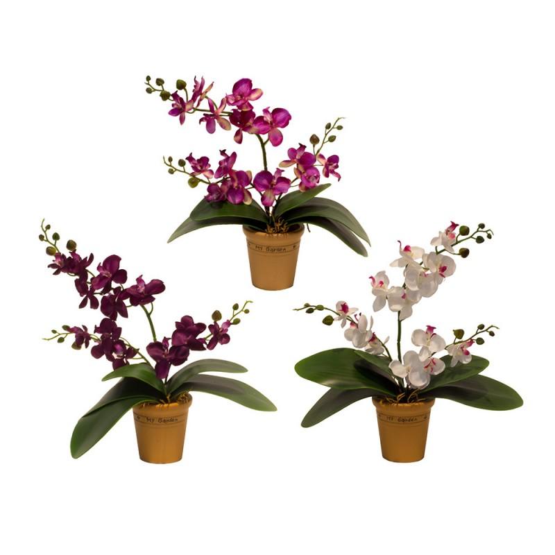 Купить цветы орхидеи в пятигорске, коробках красноярск цветы