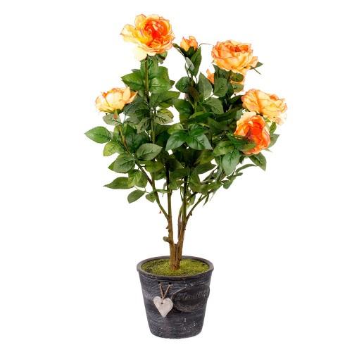 сами декоративные розы в горшках уход и фото по-другому смотрятся фотографии