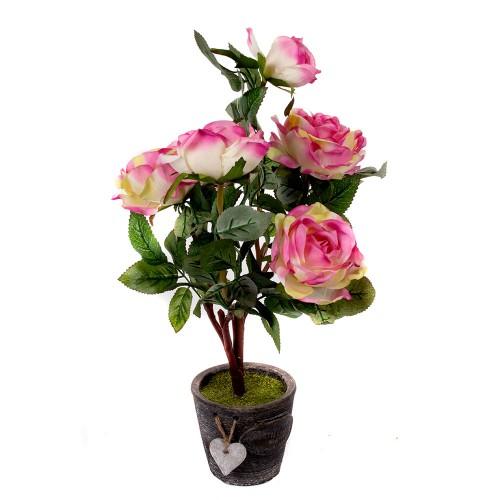 Декоративные розы в горшках уход и фото