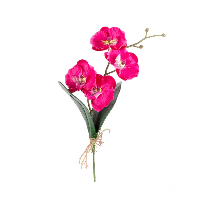 Цветов абакане, купить цветы орхидеи в пятигорске