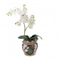 Композиция Орхидеи в вазе