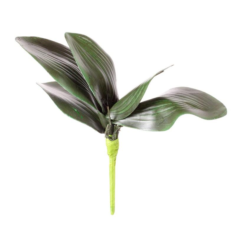 Купить цветы орхидеи в пятигорске, доставка цветов