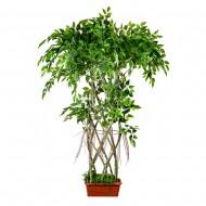 Искусственное дерево Фикус в горшке 130 см