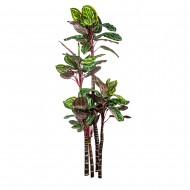 Искусственное дерево Калатея 170 см