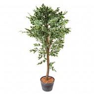 Композиция Дерево Фикус 1,8 м