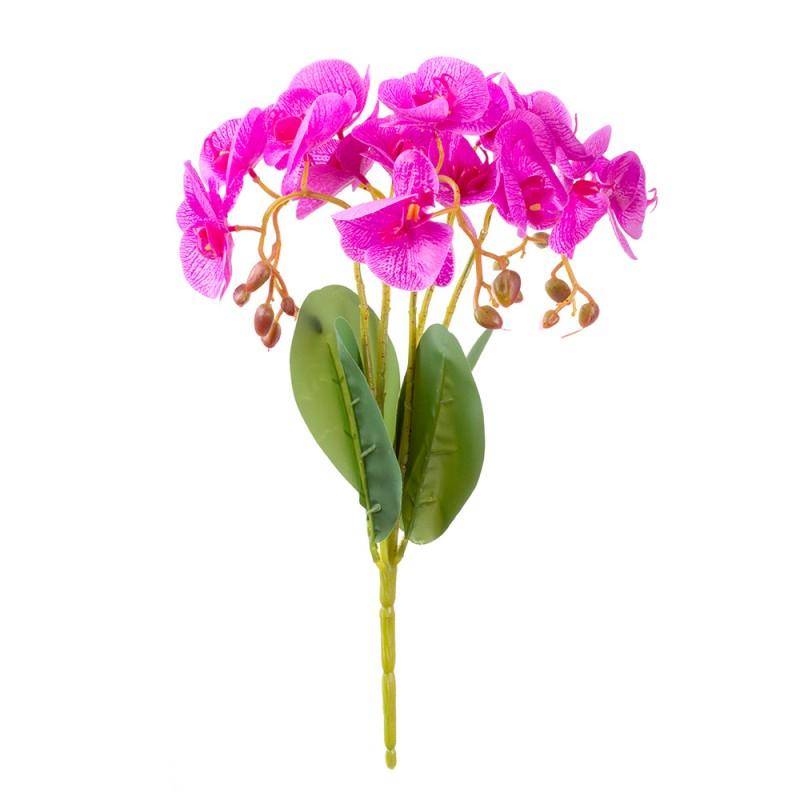Купить цветы орхидеи в пятигорске