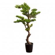 Дерево Бонсай в горшке 126 см