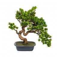 Дерево Бонсай в горшке 46 см