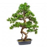 Дерево Бонсай в горшке 89 см